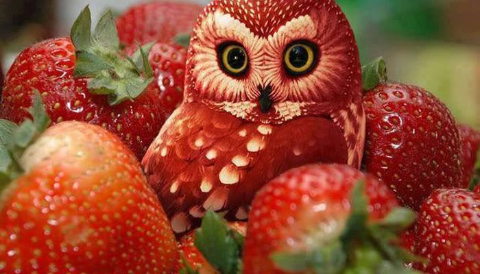 fruit-animal-art-01.jpg